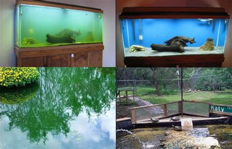84 Best Images About Diy Stock Tank Pond On Pinterest Tow Hook License Plate Holder Diy Christmas Wreath Easy Entryway Table Plans Scented Candles From Old Transfer Photo To Canvas Modge Podge Neti Pot With Syringe Liquid Laundry Detergent Oxiclean Window Frame Mirror