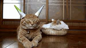 Party Hard for New Years! - CUTE CAT GIFS