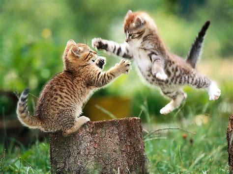 Kittens! Or How I Hijacked Blog Traffic  Still Here