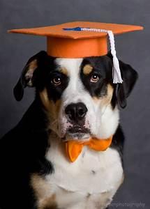 graduation cap graduation hat costume by petdogtrainer