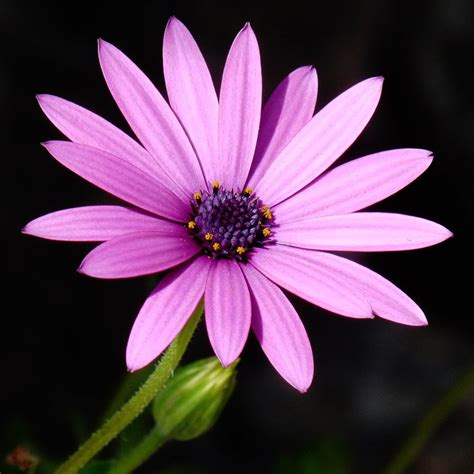 www picture of flower a flower for silvia by dieffi on deviantart