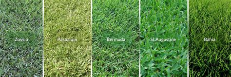types of lawns zoysia grass archives murray lawn mower parts