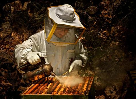 como se llama  la personas  cria abejas