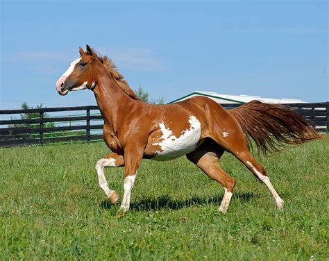 horse fencing horses fence contractor consulting pet selecting