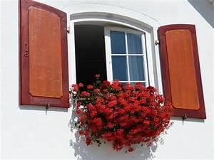 Viele Fliegen Am Fenster : geranien pelargonien ratgeber rund um die pflanzen auf dem balkon ~ Orissabook.com Haus und Dekorationen
