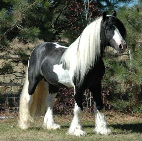 horses   hair   barnorama