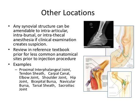 equine nerve joint blocks