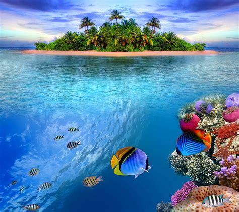Animated Reef Wallpaper - reef wallpaper wallpapersafari
