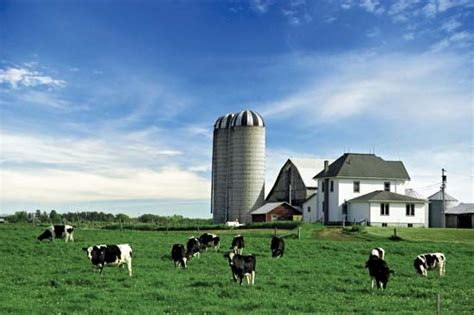dairy farm with holstein cows in pasture and three silos holstein friesian encyclopedia children s