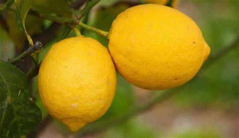 comment faire la toilette intime limoneros para huertos terrazas y jardines floresyplantas net