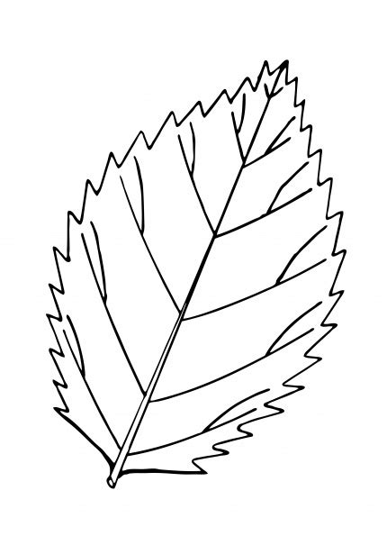 leaf outline illustration clipart  stock photo