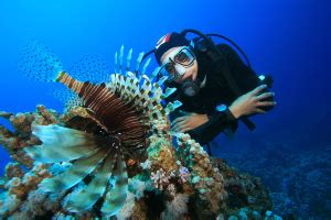 How To Become A Marine Biologist  Environmentalscience. Honda Corpus Christi Tx Michigan Tech College. Online Classes For Vet Assistant. Broadband Internet Seattle Plumbers Tempe Az. Exhibition Display Panels All Types Of Nurses. Bankruptcy Attorney Wilmington Nc. Home Improvement Contractor Insurance. Oklahoma Divorce Lawyers Texas Bankruptcy Law. Inchcape Villas Barbados Grange Auto Insurance