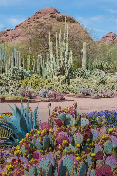 desert botanical garden desert botanical garden offers wide variety of classes for