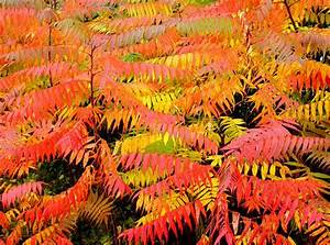 Best Plants for Fall Color The Garden Glove