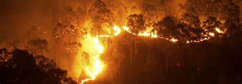 bushfire checklist bushfire prevention bushfire