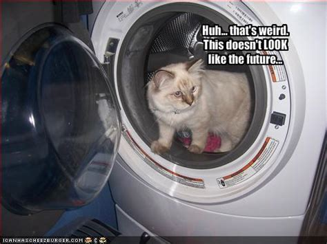 Funny Picture Clip Best Of Cool Funny Cat Pictures