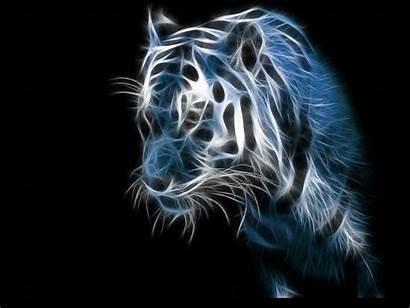 Tiger 3d Wallpapers Desktop Backgrounds Background Fire