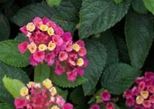 Pflanzen Für Nordseite : sommerbepflanzung balkon balkonbepflanzung im sommer s dseite oder nordseite beispiele ~ Frokenaadalensverden.com Haus und Dekorationen