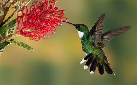 bringing hummingbirds   garden home wizards