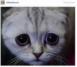 Meet The Cutest Sad-Faced Kitty On Instagram - Little P ...