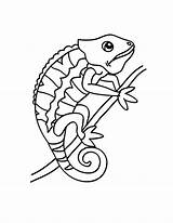 Chameleon Coloring Pages Changing Drawing Line Place Getdrawings sketch template