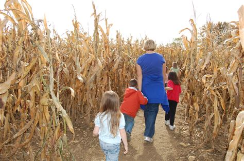 100 corn maze at liberty mills lawyer u0027s