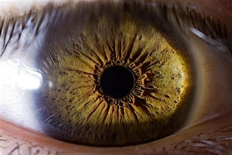 eye candy   origins paste