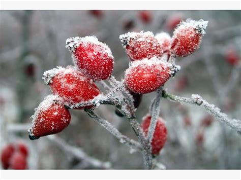 im winter blühende blumen blumenstrau 223 ideen pflege und tipps mein sch 246 ner garten