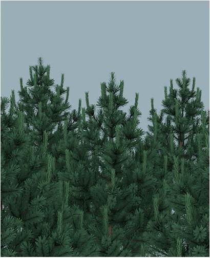 Evergreen Webinars Forest Giphy Saas Sell Trees