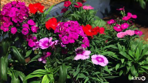 edible winter flowers bastrop gardens central texas
