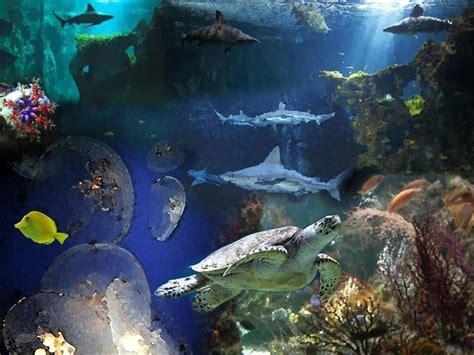 aquarium de la rochelle 224 1 heure en voiture alentours du cing 224 royan cing