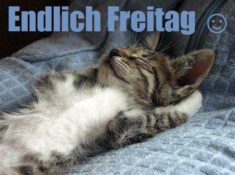 endlich freitag humor pinterest humor  cat