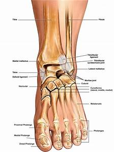 Ankle Diagrams