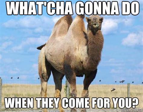 Camel Memes - funny camel memes images