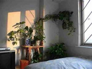 Badezimmer Pflanzen Ohne Fenster : pflanzen fr badezimmer free pflanzen fr badezimmer with pflanzen fr badezimmer top fliesen und ~ Bigdaddyawards.com Haus und Dekorationen