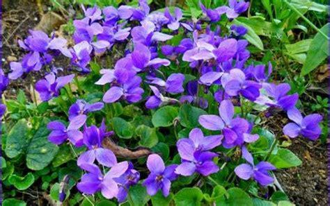 maison de la violette toulouse guide tourisme ladepeche fr