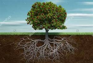 9  Tree Illustrations
