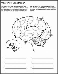 12 Best Images Of Neuron Worksheet S
