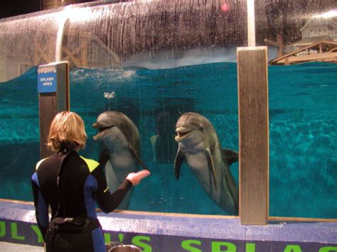 zoo indianapolis dolphins zoos dolphin indiana commons wikipedia aquarium trainer breeding file drive wikimedia wiki mammals captivity durin purchases botched