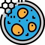 Zelle Icon Icons