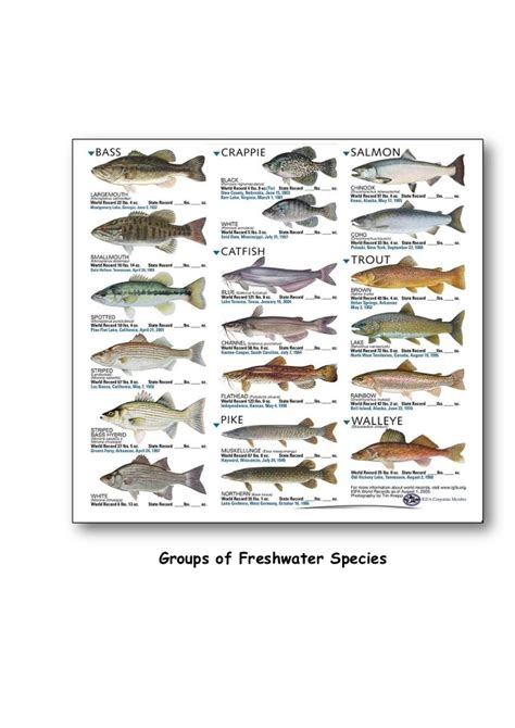 fish seed production cultivable fish species  fish