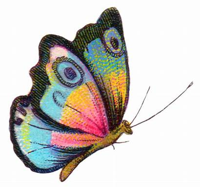 Butterfly Colorful Printable Kupu Clipart Gambar Transparent