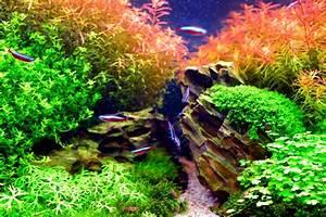 Pflanzen Für Aquarium : pflanzen f rs nano aquarium diese eignen sich am besten ~ Buech-reservation.com Haus und Dekorationen