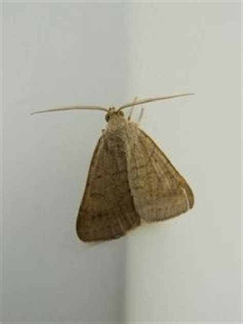 Moths In Kitchen Cupboards by 15 Best Images About Pantry Pests On Shopping