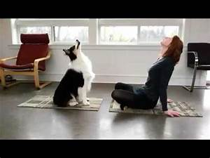 dog doing yoga with owner youtube With tapis de gym avec canapé padova