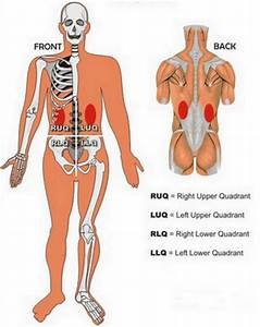 Wiring Diagram  34 Where Are My Kidneys Located In My Body