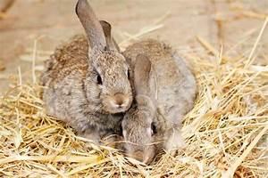 Kaninchenkäfig Für 2 Kaninchen : kleintiergehege f r kaninchen ~ Frokenaadalensverden.com Haus und Dekorationen