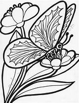 Coloring Butterfly Flowers Butterflies Flower Adults sketch template