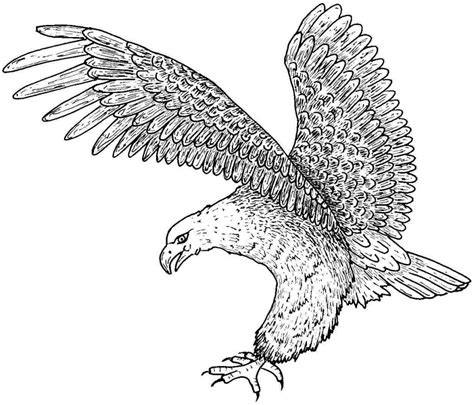 printable eagle coloring pages  kids