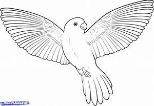 How To Draw Birds Step By Step How To Draw A Bird How To
